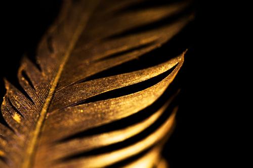 Falikép a hálószobához, arany toll, fekete, csillogás